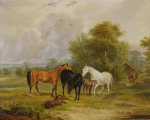Horses Grazing: Mares and Foals in a Field