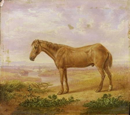 Old Billy, a Draught Horse, Aged 62