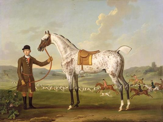 Scipio, Colonel Roche's Spotted Hunter, c.1750