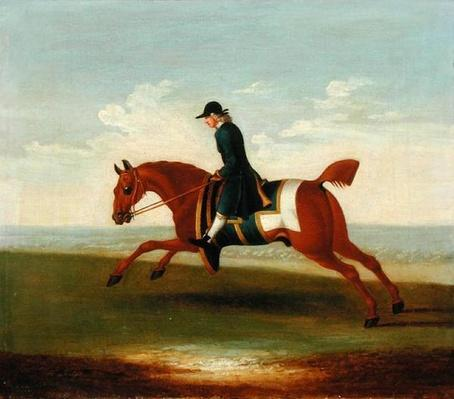 Chestnut Racehorse Exercised by a Trainer in a Blue Coat
