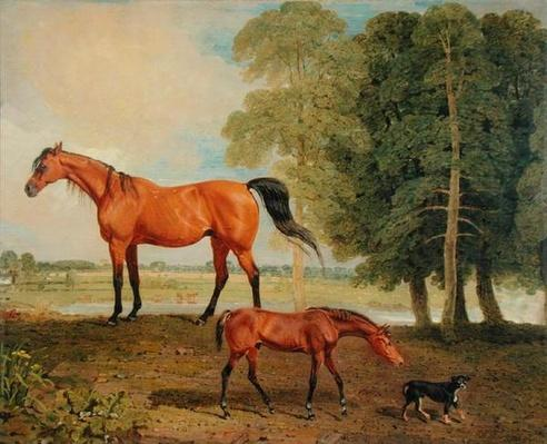 Broodmare with Foal and Terrier
