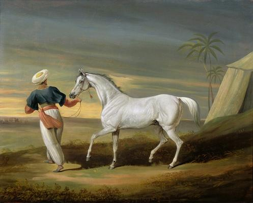 Signal, a grey Arab, with a Groom in the Desert
