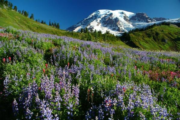 Mount Rainier National Park | Ken Burns: The National Parks