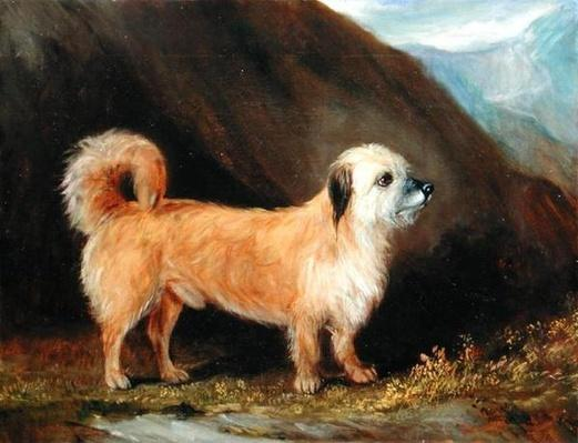 A Dandie Dinmont Terrier, 1848