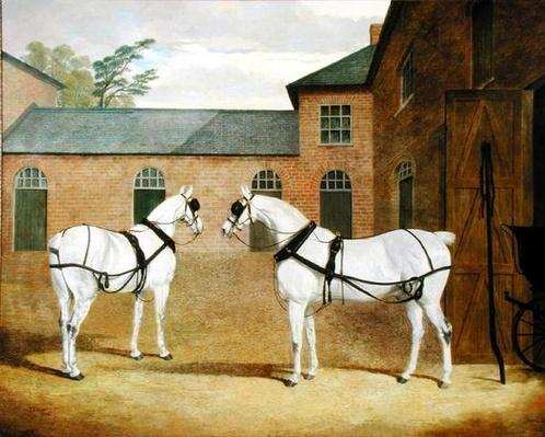 Mr. Sowerby's Grey Carriage Horses in his Coachyard at Putteridge Bury, Hertfordshire, 1836