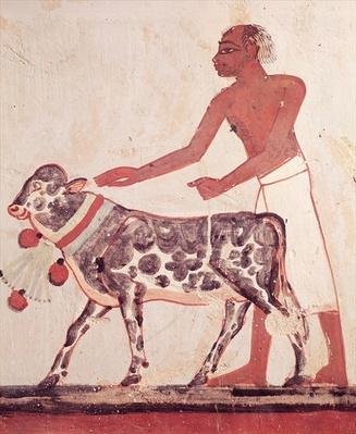 Peasant leading a cow to sacrifice, from the Tomb of Menna