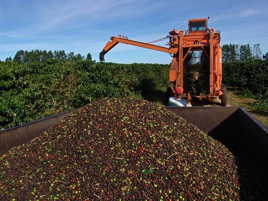 Harvest of Coffee | Earth's Resources