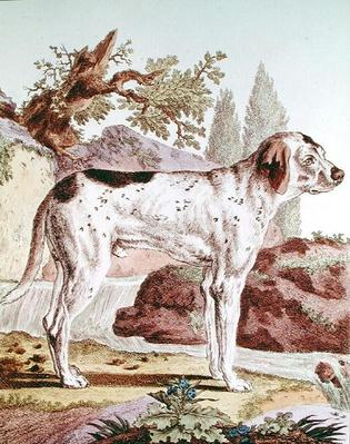 A Pointer, illustration from 'Histoire Naturelle' by Georges Louis Leclerc