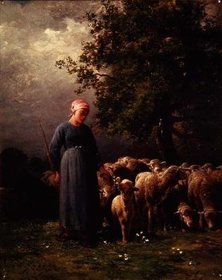 The Missing Flock