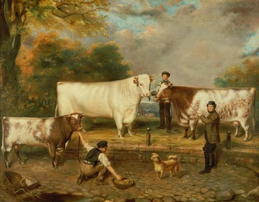 Cows with a herdsman