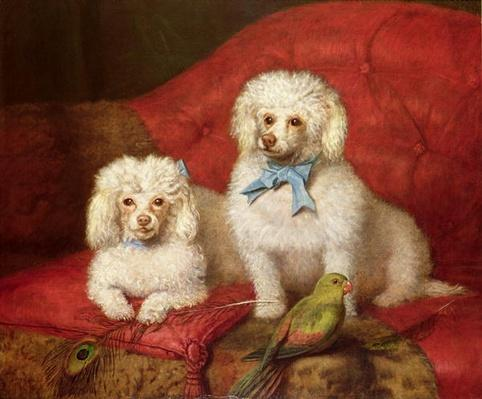 A Pair of Poodles