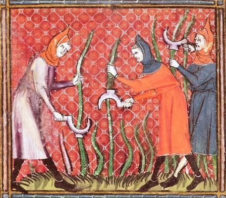 Ms 1044 f.120 Cutting Trees, from Ovide Moralise written by Chretien Legouais