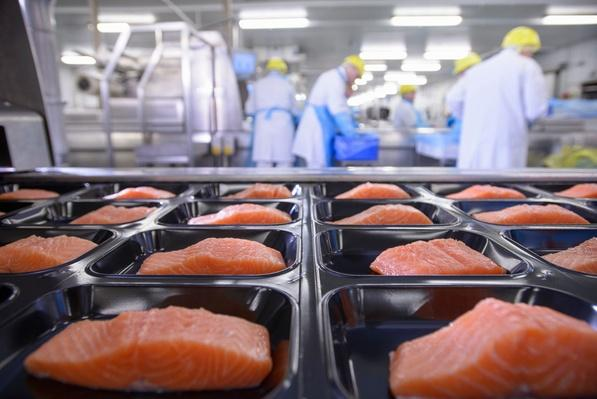Salmon Fillets in Busy Food Factory | Earth's Resources
