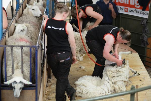 Female Farmers Attempt Sheep Shearing Charity Challenge | Agriculture and Forestry