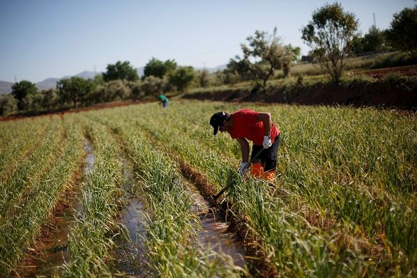 Unemployed Spaniards Grow Their Own Vegetables | Agriculture and Forestry