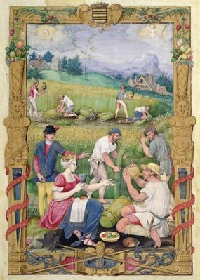 The Month of August: The Harvest