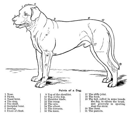 The Points of a Dog | Plants and Animals