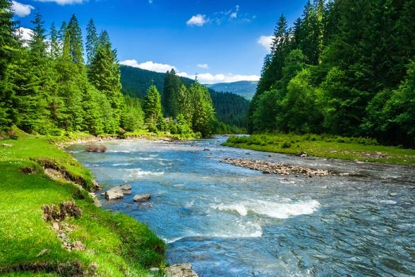 Mountain river | Animals, Habitats, and Ecosystems