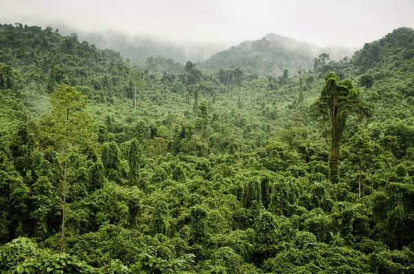 Misty Jungle, H?� Tinh Province, Vietnam | Animals, Habitats, and Ecosystems