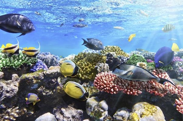 Coral and fish in the Red Sea.Egypt | Animals, Habitats, and Ecosystems