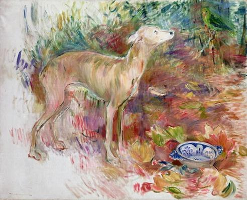 Laerte the Greyhound, 1894