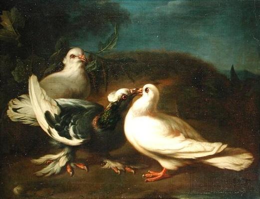Doves, 1724