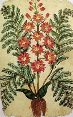 Fern with red and yellow flowers, plate from a seed merchants in Oisans