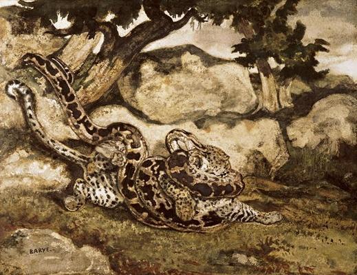A Python Killing a Tiger