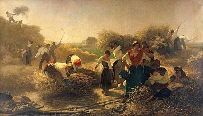 Threshing Rapeseed in the Fields of Lille