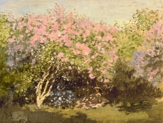 Lilac in the Sun, 1873
