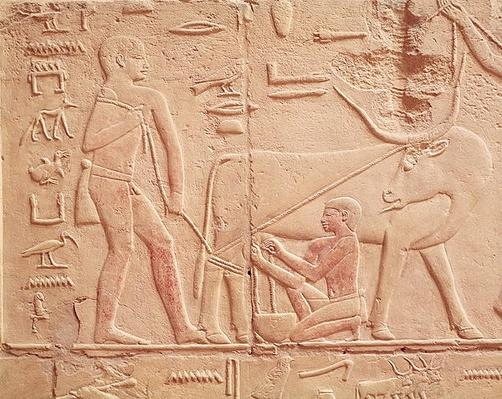 Relief depicting a man milking a cow, from the Mastaba of Kagemni, Old Kingdom