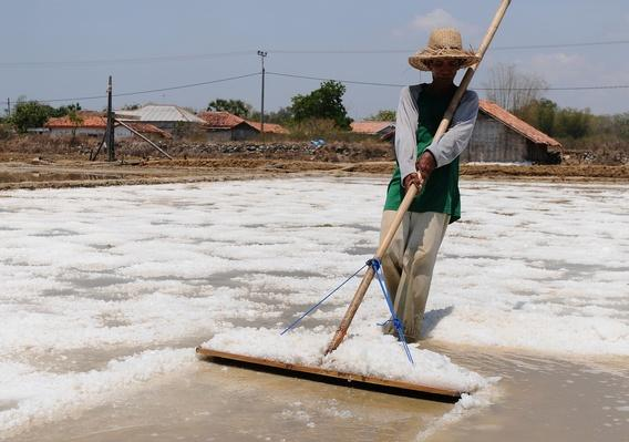 Indonesian Salt Harvesters See Results of 10 Month Drought | Agriculture and Forestry