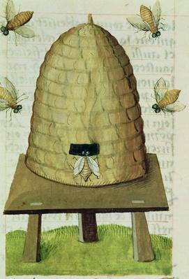 Ms 5/9 fol.111r Beehive and Bees, from 'Grand Herbier'