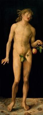Adam, 1507