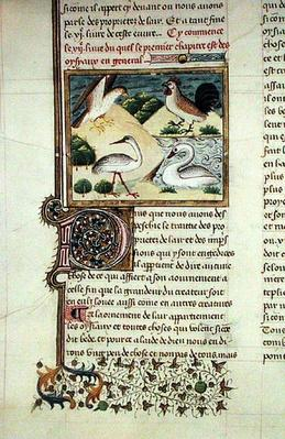 Ms 399 The Properties of Birds, from 'Livre des Proprietes des Choses' by Barthelemy l'Anglais
