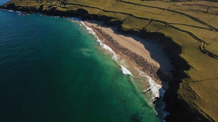 Offshore Island Exploration | Ireland's Wild Coast