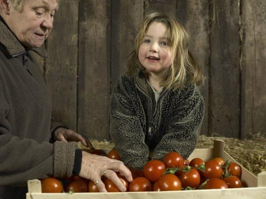 Grandmother and Granddaughter Sorting Crate of Tomatoes | Earth's Resources