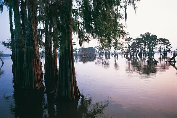 Atchafalaya River, Atchafalaya Basin, Louisiana, USA | Earth's Surface