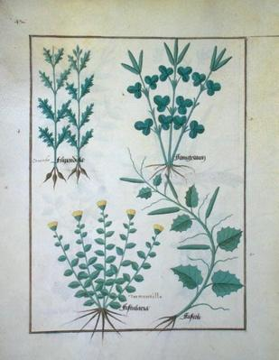 Ms Fr. Fv VI #1 f.132v Top row: Filipendula. Bottom row: Fistularia and Faseolus, illustration from 'The Book of Simple Medicines', by Mattheaus Platearius