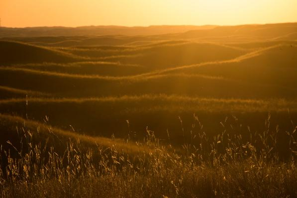 photo of the Sandhills landscape