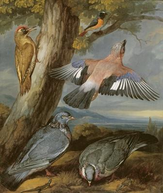 Jay, Green Woodpecker, Pigeons and Redstart, c.1650