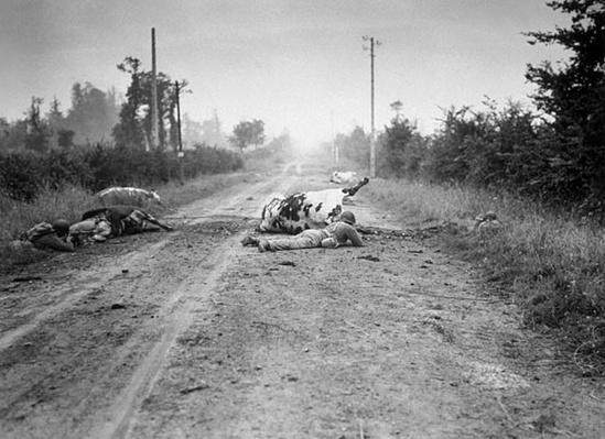 Normandy: Dead Cows Provide Cover | Ken Burns: The War