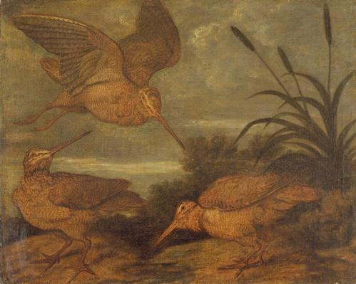 Woodcock at Dusk, c.1676