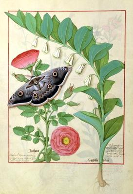 Ms Fr. Fv VI #1 fol.118v Rose and Polygonatum