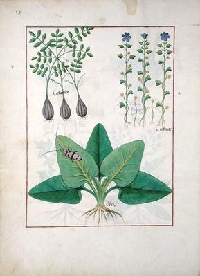 Ms Fr. Fv VI #1 fol. Illustration from the 'Book of Simple Medicines' by Mattheaus Platearius