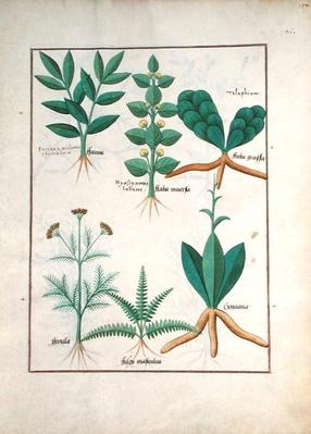 Ms Fr. Fv VI #1 fol.157r Ferns and Shrubs, Illustration from the 'Book of Simple Medicines' by Mattheaus Platearius