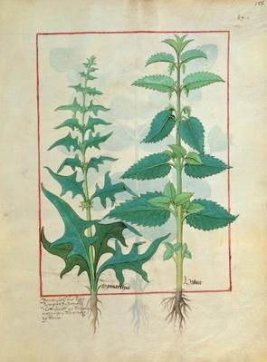 Ms Fr. Fv VI #1 fol.156r Urticaceae