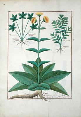 Ms Fr. Fv VI #1 fol.150v Illustration from the 'Book of Simple Medicines' by Mattheaus Platearius