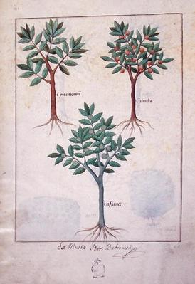 Ms Fr. Fv VI #1 fol.169v Illustration from the 'Book of Simple Medicines' by Mattheaus Platearius