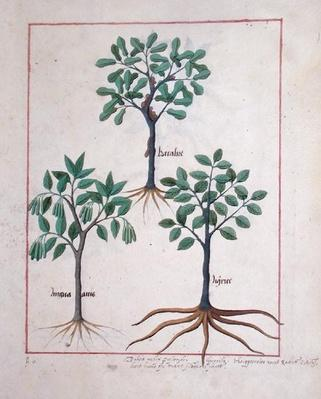 Ms Fr. Fv VI #1 fol.167r Illustration from the 'Book of Simple Medicines' by Mattheaus Platearius